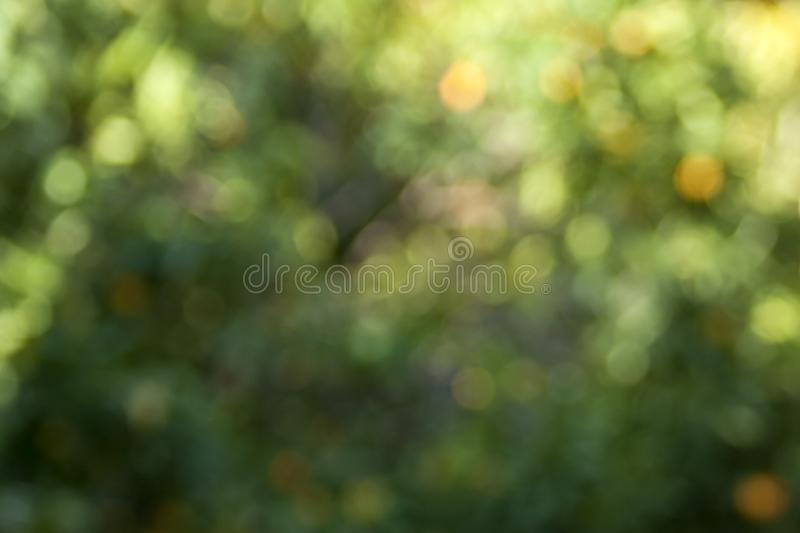 Abstract blurred green, yellow and orange lights background royalty free stock photos