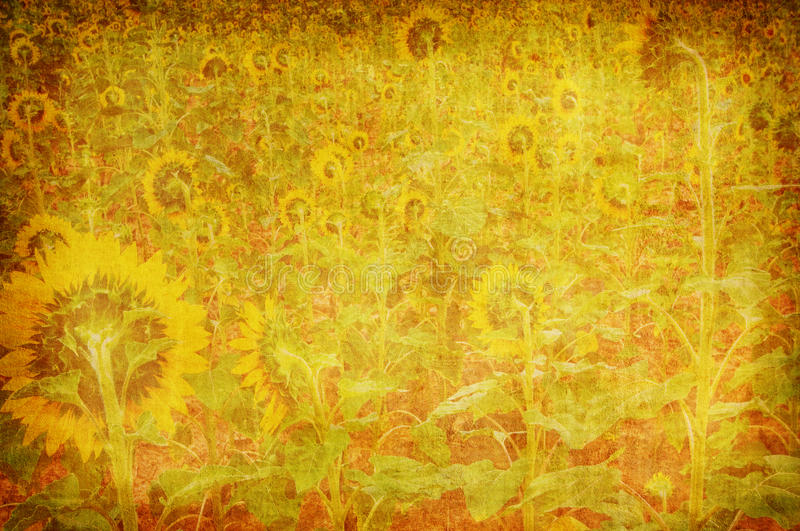 Abstract grunge sun flower texture stock photography