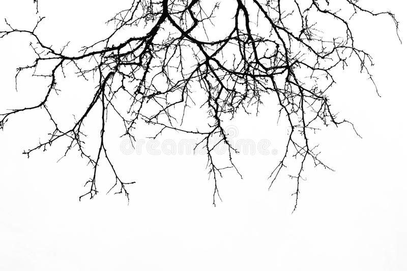 Abstract Halloween background. Black branch of tree on a white b. Ackground. Horror concept, halloween party,banners,cards,wallpaper. Copy space royalty free stock images