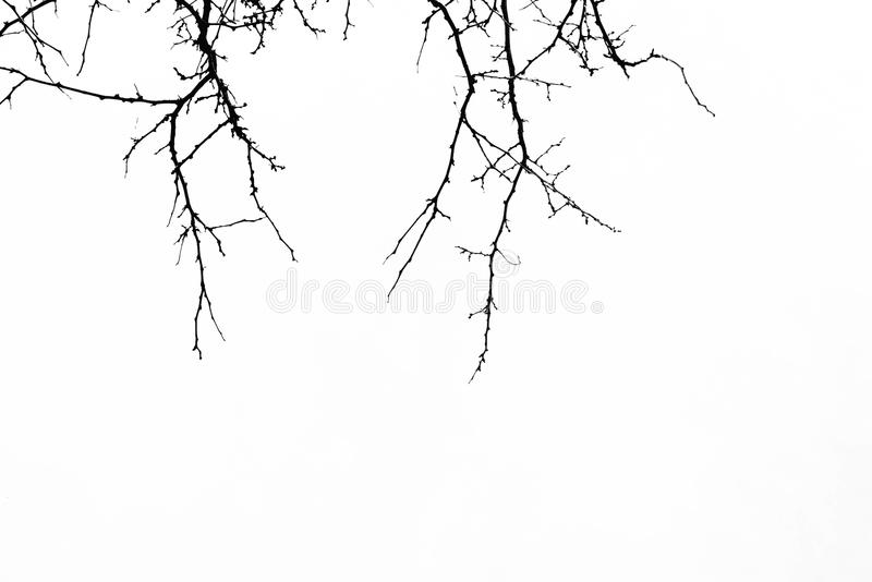 Abstract Halloween background. Black branch of tree on a white b. Ackground. Horror concept, halloween party,banners,cards,wallpaper. Copy space stock photos