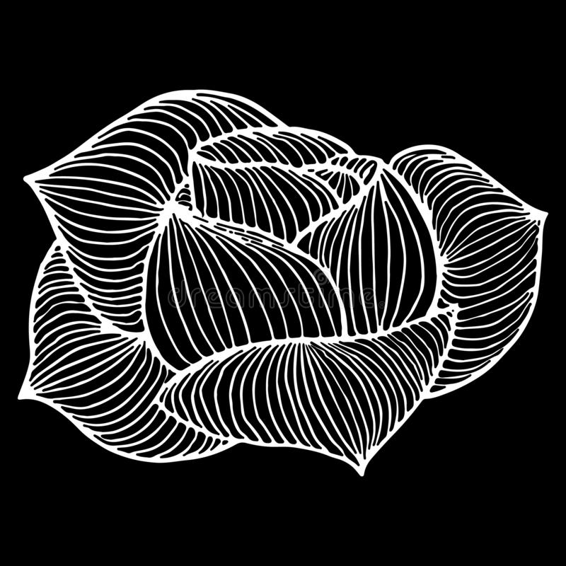 Abstract hand drawn rose or peony flower isolated on black background.  illustration. Line art. Sketch.  vector illustration