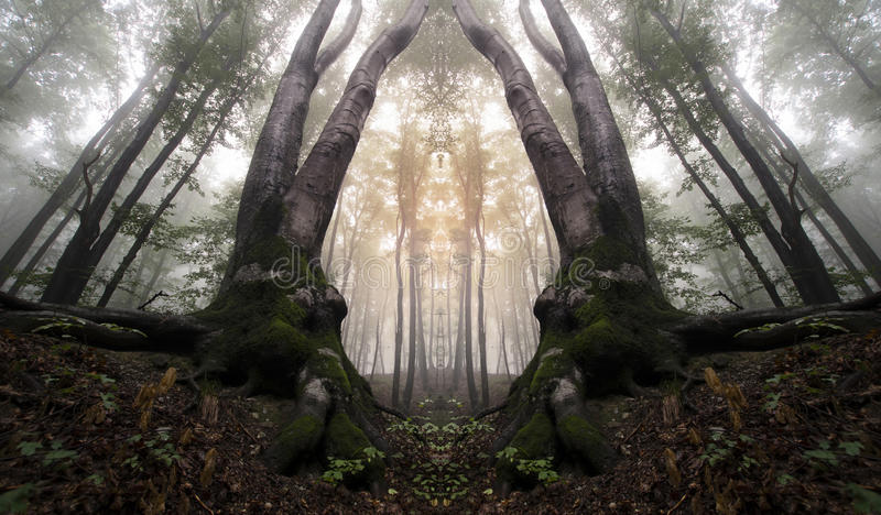 Abstract haunted mirrored forest. With fog stock images