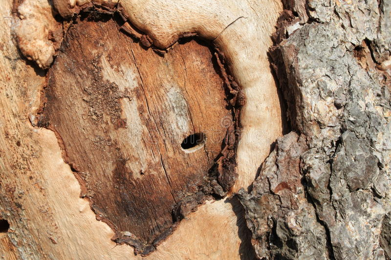 Abstract heart. On a tree stock photography