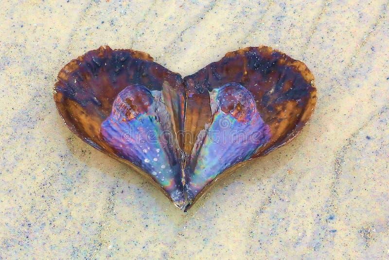 Abstract Heart-Shaped Seashell On The Beach. An empty Atrina rigida, or Rigid Pen Shell, abstract heart-shaped seashell on wet sand with water ripples imprints stock photos