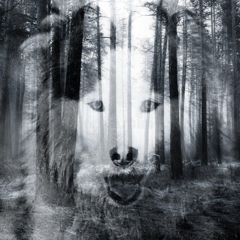 Abstract hondportret stock afbeeldingen
