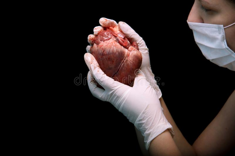 Abstract illegal organ transplantation. A human heart in the hand of a surgeon woman. International crime. Assassins in white coat stock photography