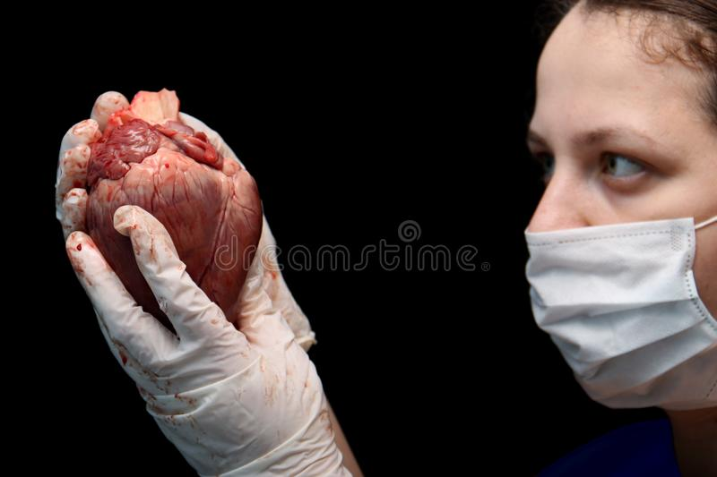 Abstract illegal organ transplantation. A human heart in the hand of a surgeon woman. International crime. Assassins in white coat royalty free stock photo