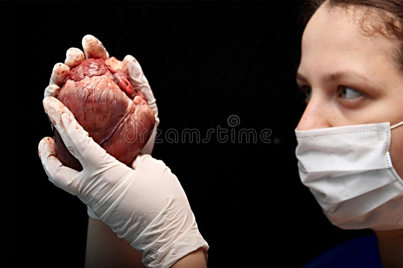 Abstract illegal organ transplantation. A human heart in the hand of a surgeon woman. International crime. Assassins in white coat royalty free stock image