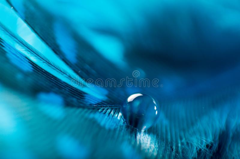 A abstract image of blue color fluffy feathers with one macro dew water drop, beautiful natural background. royalty free stock images