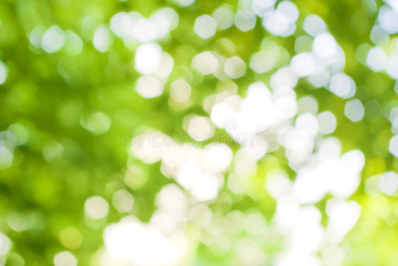 Abstract image of a green plant background royalty free stock photos