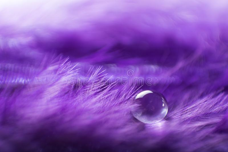 A abstract image of purple color fluffy feathers with one macro water dew drop, beautiful natural background. royalty free stock photos