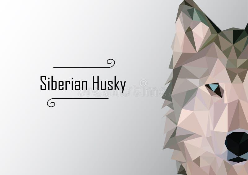 Abstract image of Siberian husky. illustration. stock photos
