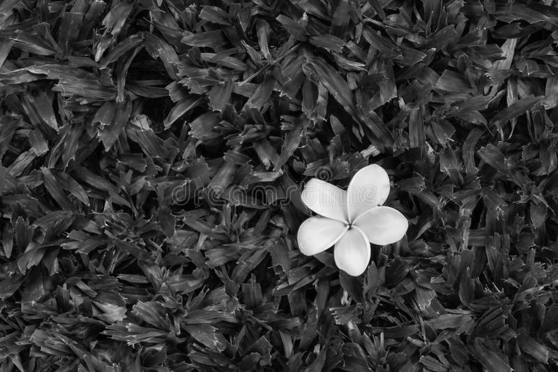 Download Abstract Image White Flower On Green Grass In Black And White Effect. Stock Image - Image: 94965983