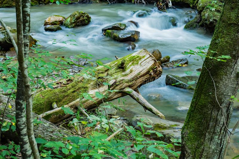 Abstract Image of Wild Mountain Trout Stream. An abstract view of a wild mountain trout stream located in the Jefferson Nation Forest, Botetourt County, Virginia stock images