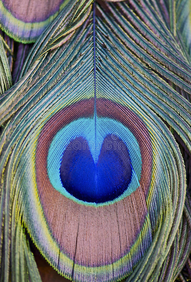 Abstract of an Indian Peacocks' Feathers stock image