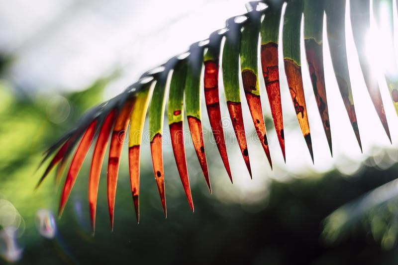 Abstract jurassic looking plant leaf isolated stock photo
