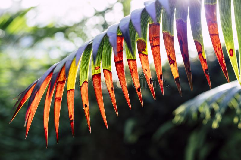 Abstract jurassic looking plant leaf isolated royalty free stock photo