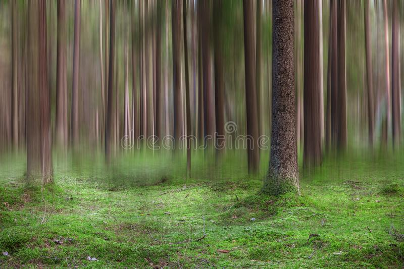 Abstract blurred tree trunks in the forest royalty free stock photography