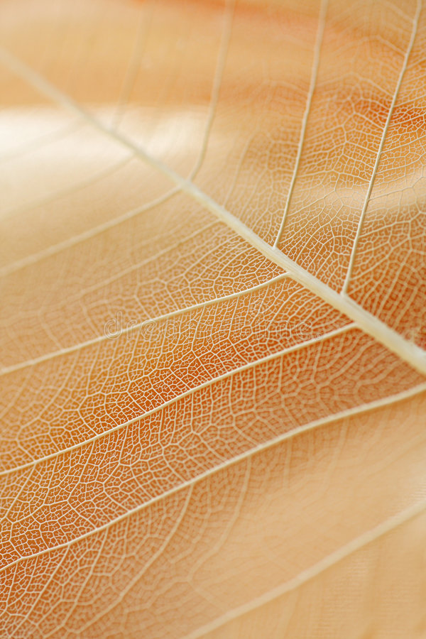 Abstract leaf stock image