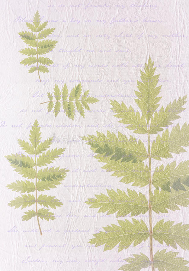 Abstract leaf background