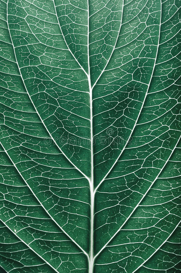 Abstract leaf pattern details royalty free stock image