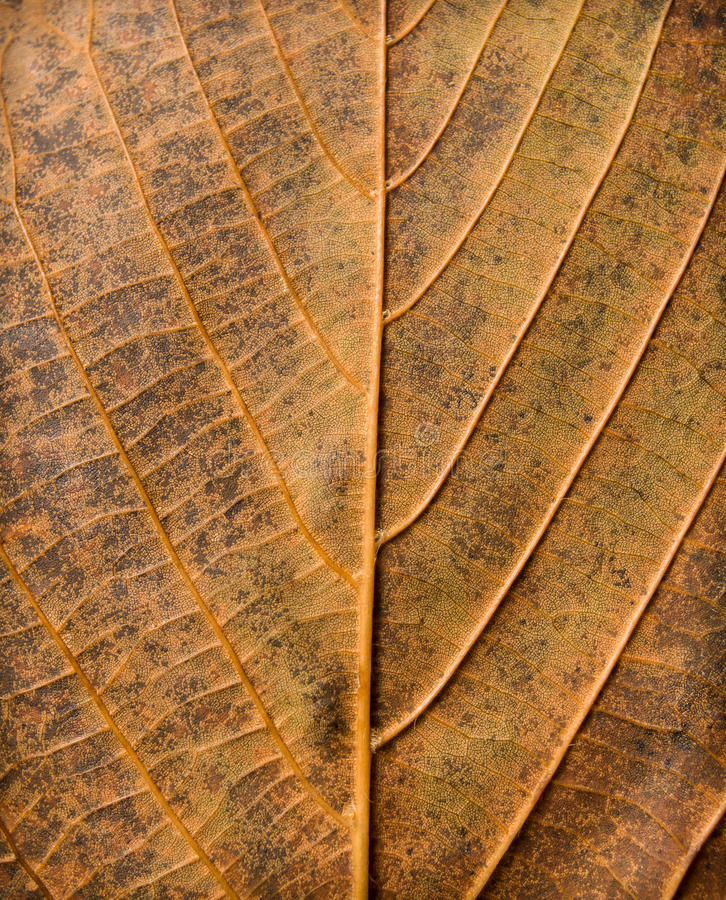 Download Abstract Leaf Texture Royalty Free Stock Image - Image: 27386556