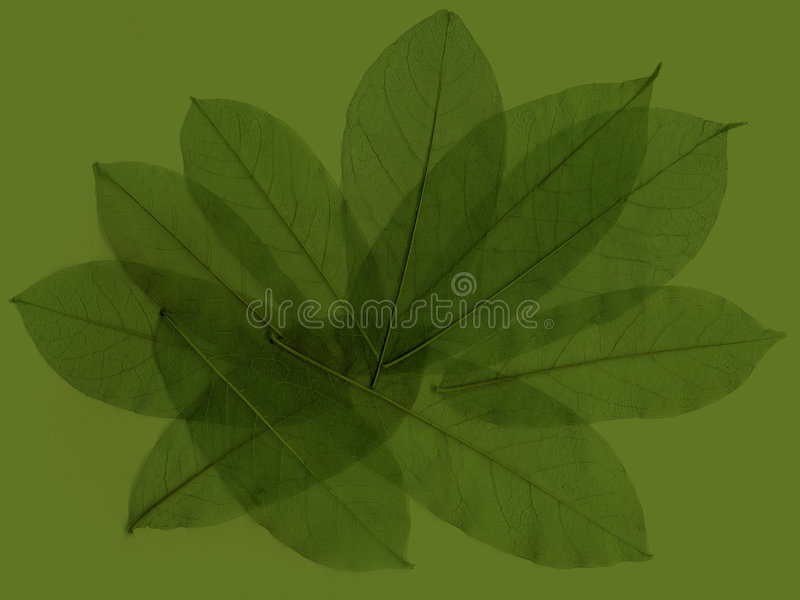 Abstract leaves 4 stock illustration