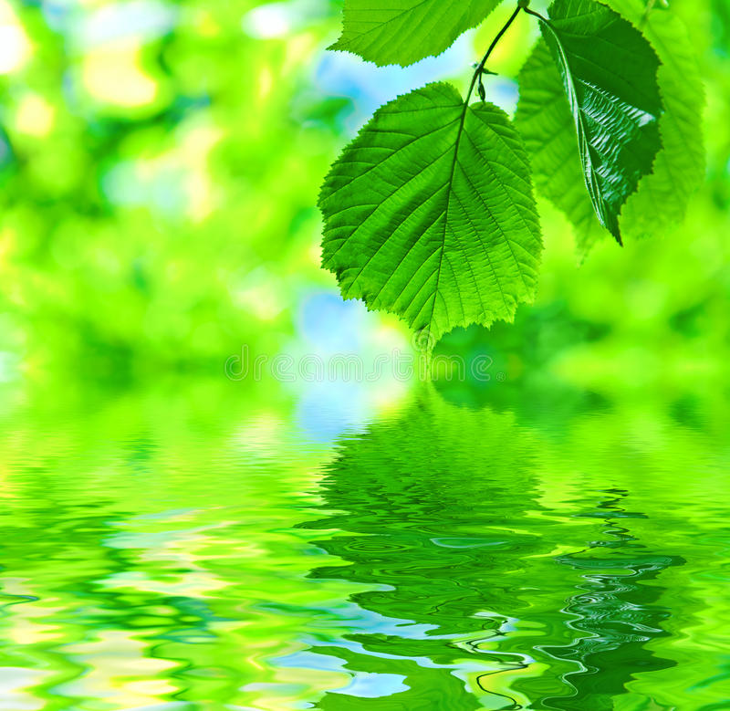 Abstract leaves on water. Abstract fresh green leaves on water stock photo
