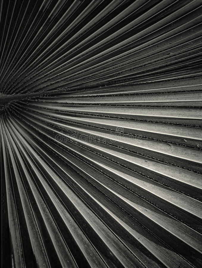 Abstract lines. Black and white image royalty free stock photography