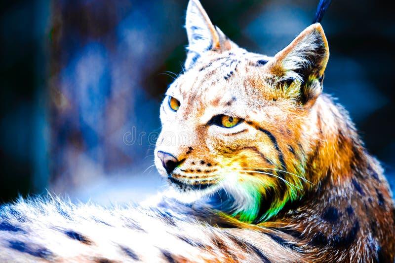 Abstract lynxportret stock foto