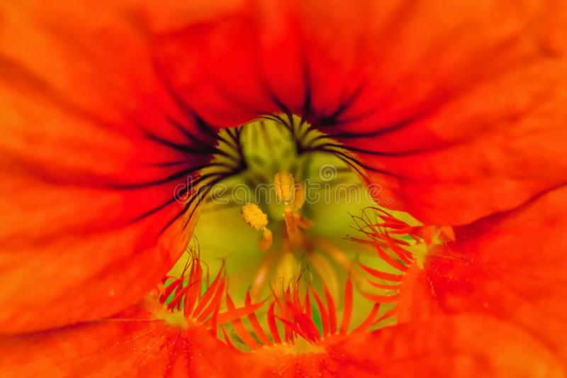 Center of the flower and pistil and stamen. Abstract macro photo of center of the flower and stock photos