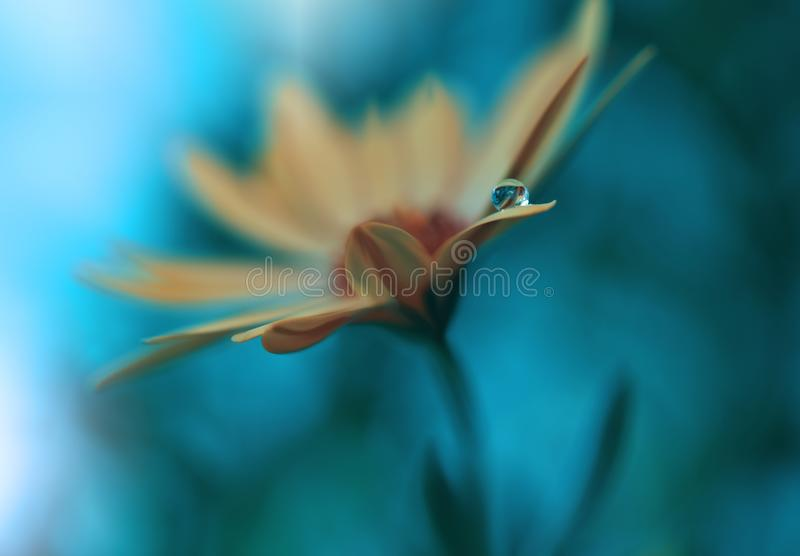 Beautiful flowers reflected in the water,artistic concept.Tranquil abstract closeup art photography.Floral fantasy design. royalty free stock photos