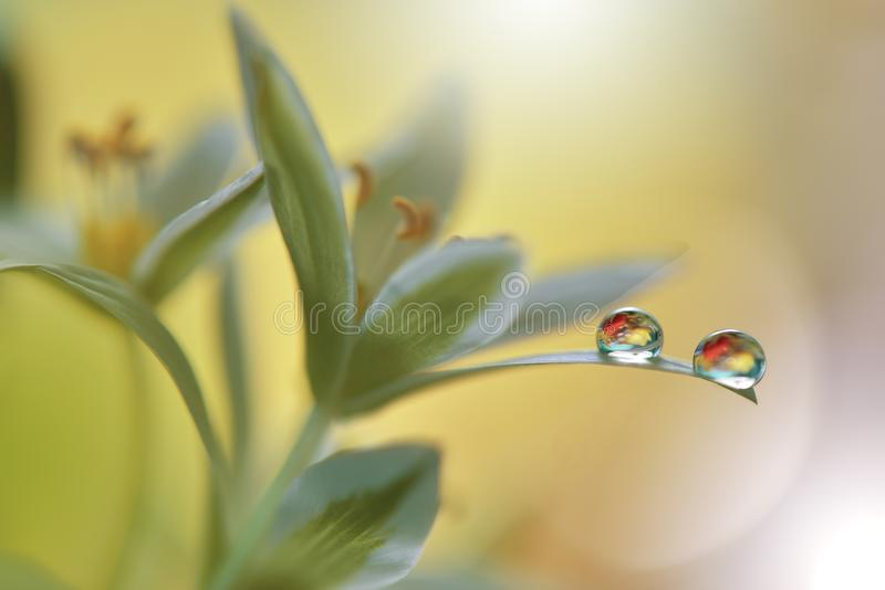 Beautiful flowers reflected in the water,artistic concept.Tranquil abstract closeup art photography.Floral fantasy design. Abstract macro photo with flower and royalty free stock images