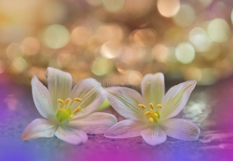 Beautiful macro shot of magic flowers. Border art design. Magic light.Close up macro photography.Conceptual abstract nature.Web. Abstract macro photo with stock image