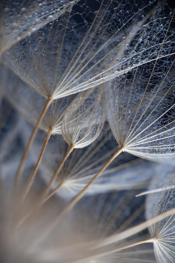 Abstract macro photo of plant seeds stock image