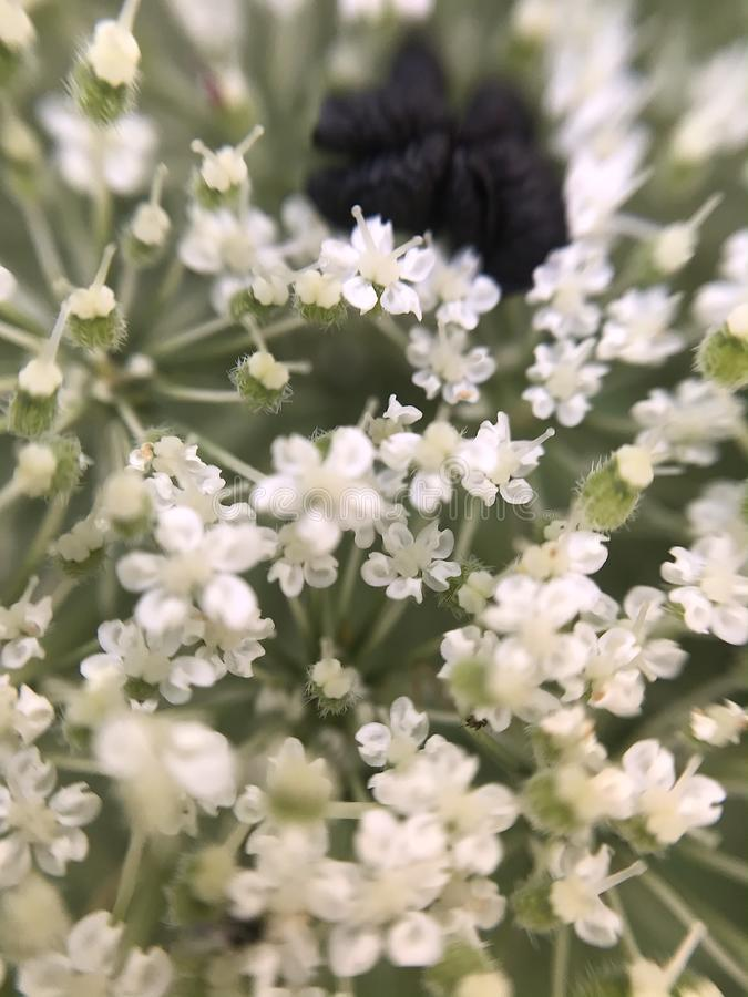 Abstract macro photo of small white flowers royalty free stock photo