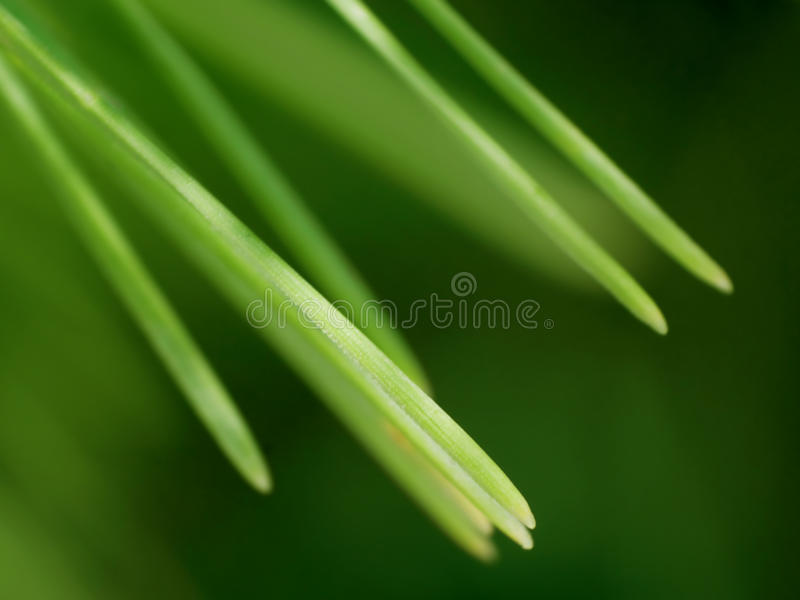 Download Abstract Macro Pine Background Stock Image - Image: 11255339