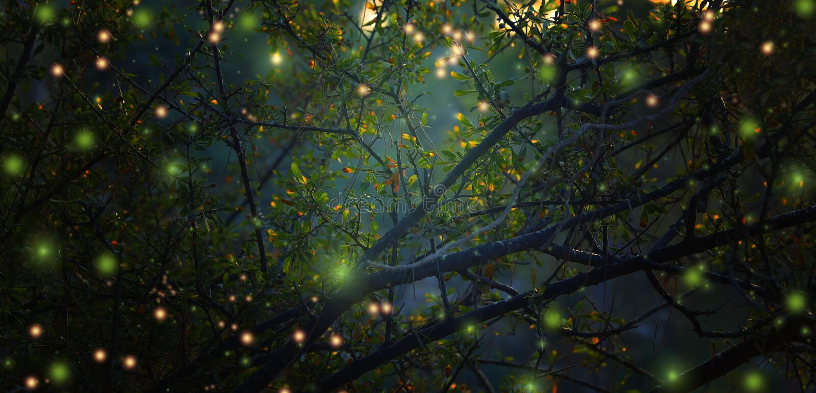 Abstract and magical image of Firefly flying in the night forest stock images