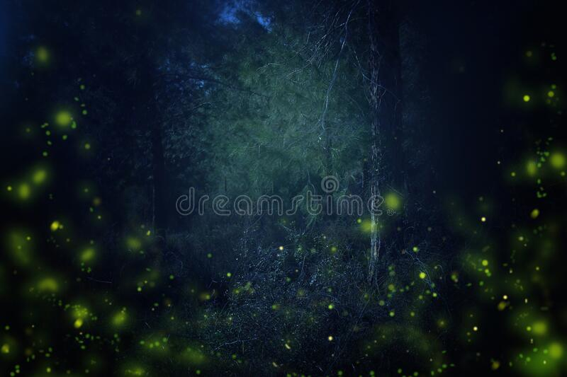 Abstract and magical image of Firefly flying in the night forest. Fairy tale concept royalty free stock photography