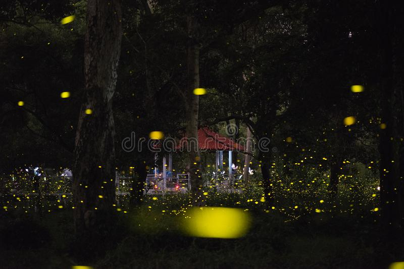 Abstract and magical image of Firefly flying in the night forest royalty free stock photography