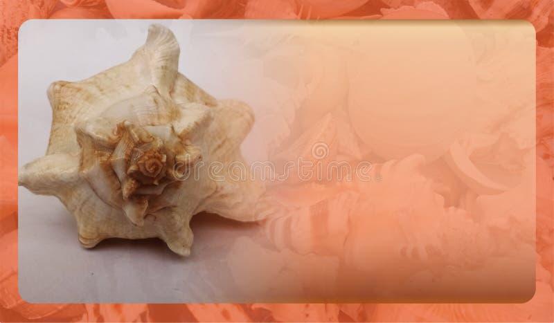 Abstract malplaatje overzeese shell als achtergrond voor website, abstract het malplaatjeontwerp van de informatiegrafiek stock foto's