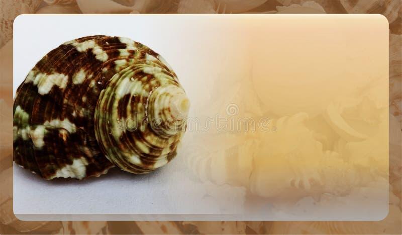 Abstract malplaatje overzeese shell als achtergrond voor website, abstract het malplaatjeontwerp van de informatiegrafiek royalty-vrije stock foto's