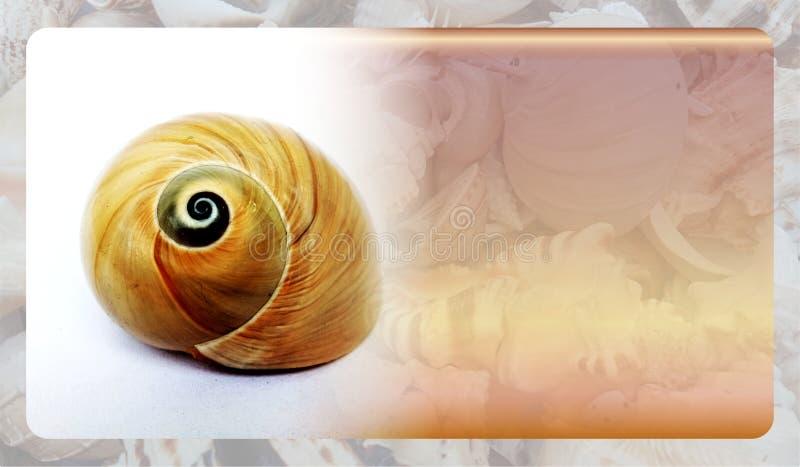 Abstract malplaatje overzeese shell als achtergrond voor website, abstract het malplaatjeontwerp van de informatiegrafiek royalty-vrije stock afbeeldingen