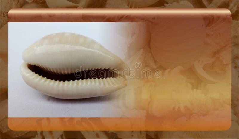 Abstract malplaatje overzeese shell als achtergrond voor website, abstract het malplaatjeontwerp van de informatiegrafiek stock foto