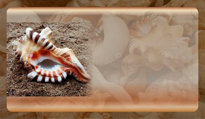 Abstract malplaatje overzeese shell als achtergrond voor website, abstract het malplaatjeontwerp van de informatiegrafiek royalty-vrije stock foto