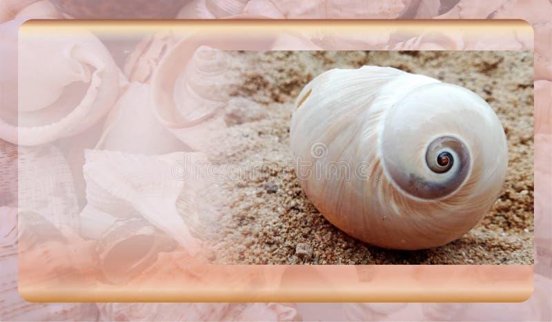 Abstract malplaatje overzeese shell als achtergrond voor website, abstract het malplaatjeontwerp van de informatiegrafiek royalty-vrije stock fotografie