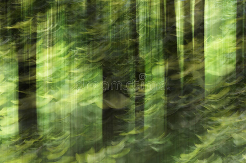 Abstract motion blur, trees trunk & leave, yellow green background stock photo