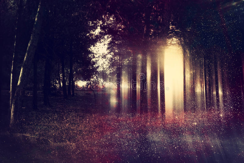 Abstract and mysterious background of blurred forest. Filtered image. Halloween concept stock photography