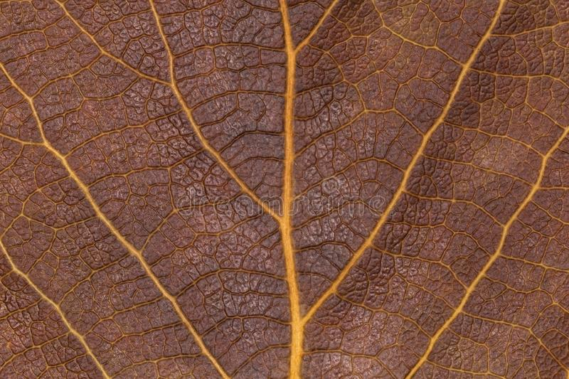 Close up of dry brown leaf texture stock photos
