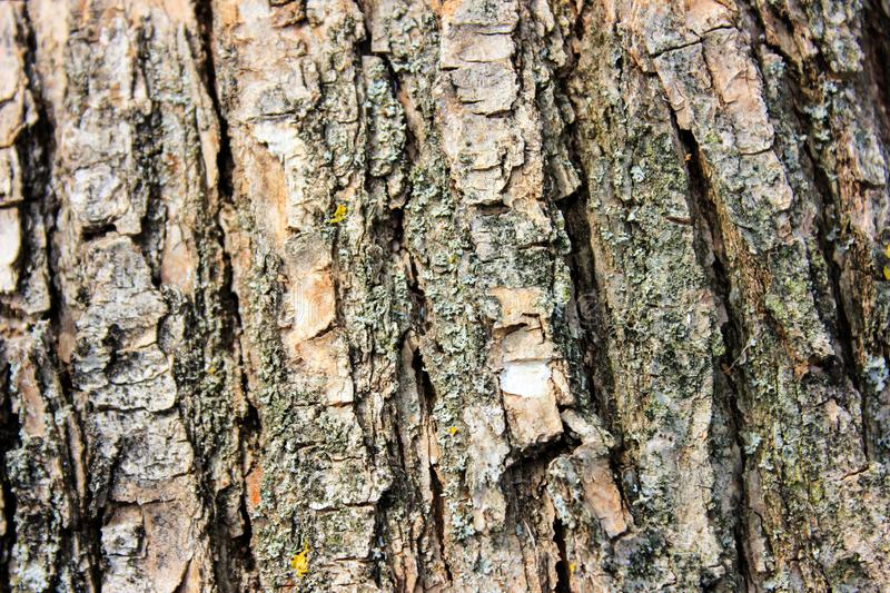 Wood structure. Abstract natural background royalty free stock photos
